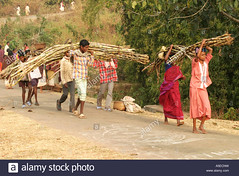 dongria-kondh-tribal-women-carrying-heavy-loads-on-their-way-to-the-A5ECNW (Matriux2011) Tags: barefoot dirtysoles cracksoles indian nepali barefootextreme talonescurtidos piesrajados