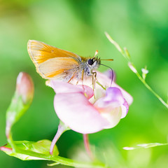 yum yum - again (ErrorByPixel) Tags: 10028 100mm 100 bright green flower k5 pentax nature butterfly macro