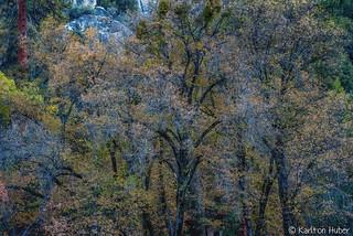 Yosemite Valley - Autumn Colors_1370