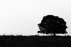 IMG_0416 (Laura Gama L.) Tags: bnw monocromo blancoynegro bnwphotography landscape casanare llanos llano colombia paisaje dramaticlandscape shape shadow silueta