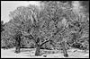 Threesome (c.wunderlich) Tags: nikond7000 1855mm landscape winter