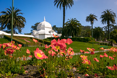 20180406-SFSunday-5000 (LucaFoto!) Tags: lucafoto best conservatoryofflowers ella flora goldengatepark humid luclucafotocom lucy photography sanfrancisco thegirls victorian fotography gardin greenhouse images orchids plants quality tropical
