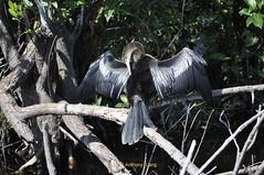 Shark Valley (allpafla) Tags: evergladesnationalpark
