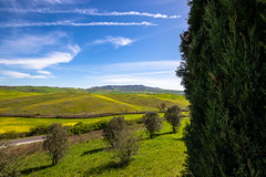 Sbirciando il panorama dietro ad un cipresso.. (Mancini photography) Tags: cypress landscape view tuscany spring sky nature countryside olive tree