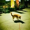 Doggie (aprilpo) Tags: travel dianamini crossprocessing xpro lomography japan kyushu asia lomographyxpro200 dog miyazaki udojingushrine shrine etoc e2c analog 鵜戶神宮 宮崎 九州 日本