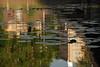 0_58171_bba6c348_orig (Tutchka) Tags: выборг кувшинки лето мост отражение разное свет солнце цвет цветы