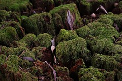 Flickr Friday 100% (qorp38) Tags: moss green stump forest tree