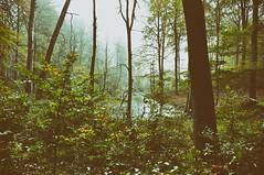 DSC_0051 - Kopie (Jens Scheider) Tags: buchenwald grumsin brandenburg uckermark