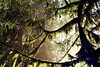 Mt. Si (Alesha A.B.) Tags: landscape film analogue color doubleexposure revolog seattle sanfrancisco beach ocean trees forest plants green blue sand pnw goldengate