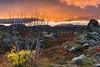 Iceland 2017 - Sunrise at Mývatn (cesbai1) Tags: iceland islande islanda islandia mývatn lac lake 2017 sunrise orange