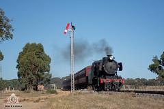 Sun Front, Signal Down (R Class Productions) Tags: victorian railways heritage vintage steam locomotive j class j549 vgr maldon muckleford 1950s
