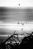 Sea,Sun & B&W . (kitchou1 Thanx 4 UR Visits Coms+Faves.) Tags: trees spring landscape france côtedopale nature people nord sky seascape bw europe exterior world arbres nb