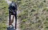 DSC_0093.jpg (bigbamboy) Tags: luna sternchen lunaundsternchen hund dobermann