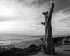 Scott-Davenport-US-California-San-Diego-2016-03-20-0004- (scottdavenportphoto) Tags: california cloud emotion flora landscape nature northamerica outdoor sandiego sky solitude sunsetcliffs tree unitedstates us