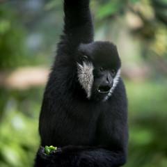 IMGP2867 (nathanmeade_) Tags: melbournewerribeezoo zoo animals tamron pentax k1 pentaxian pentaxk1 werribee melbourne zoos