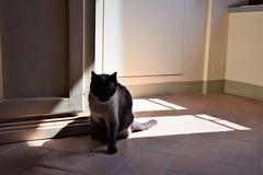 Mirame (Milos Korenev) Tags: cat room sunlight daytime light interior indoors home