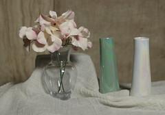 untitled (N.the.Kudzu) Tags: tabletop stilllife glass vase flowers pottery vases canondslr primelens manualfocus russianlens