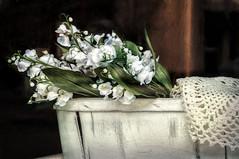 Floral Display (David DeCamp) Tags: flower rural retro decoration decor display