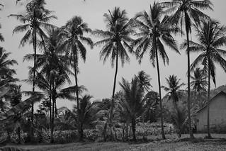 INDONESIEN, Java, Besuch im Dorf Somokerto, 17282/9811