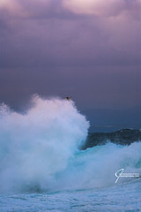 Jonathan the bravest surfer of them all (whitenoisephotography1) Tags: surf surfing waves seagull seascape storm west wind rough sardinia sunrise canon sigma rocks dramatic