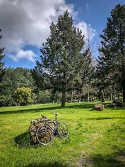 Sanborn County Park (flrent) Tags: bike ride sanborn county park san jose south bay sf sj forest tree roads california redwoods deer