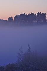 Mist (Stefano Rugolo) Tags: stefanorugolo pentax k5 pentaxk5 ricohimaging pentaxprimes primelens vintagelens evening mist fog tree hälsingland sweden countryside landscape atmosphere verticalformat