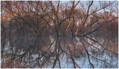 Trees (Stanislav Salamanov) Tags: spring flood trees reflections landscape morning haze silence ukraine kharkovregion salamanov closeup art print