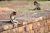 Upper Shivalaya à Badami, Inde (voyagesphotos) Tags: inde india karnataka badami singe