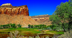 mossy pond (ttounces) Tags: ~jan~ mossy canyon green water ttounces details pond landscape