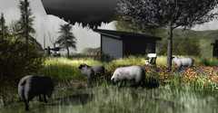 Baaa (kwright73) Tags: shadow trees shrubs destination places noise secondlife clouds postcard benches branches bushes treetop people vacant vacation beauty nightfall storm path naturelovers bridge shadows sunset sunrise rocks grass amazingviews birds city dark light quiet view air wet naked love animals perfection reflection masterpiece photography photograph pixel nature real majestic visual heaven landscape beautiful breathtaken wow water peacful outdoors amazing outside breathtaking rock tree wagonwheel pond sheep flowers outhouse shed building farm fog chair vase barbwire fence
