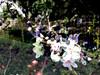 Subtract_0003 (troutcolor) Tags: imagemagick bash victoriapark evaluatesequence