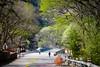 Mountain Road in Early Springdays (sawbonesliang) Tags: sunshine spring mounttai season tress treeshade raod green shade peachblossomvalley woods eaalyspring 泰安市 山东省 中国 cn