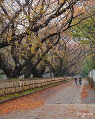 A Walk in Nagoya (DanaMichelle309) Tags: fallfoliage japan nagoya travel nagoyashi aichiken jp