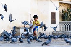 Feeding the Pigeons (PB1_0884) (Param-Roving-Photog) Tags: young boy pigeons birds kit flying feeding garins eating morning gangaur ghat udaipur rajathan tourist streetphotography urban city travel india good intentions life lessons