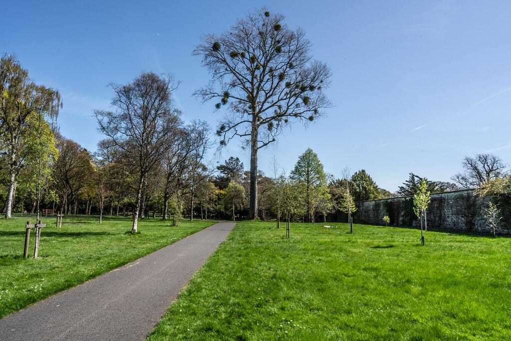 VISIT TO THE NATIONAL BOTANICAL GARDENS [GLASNEVIN DUBLIN]-138596
