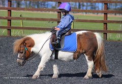 Young Rider by Julie Adams Red Photography (julz.adams) Tags: equestrians equestrian animal youngrider horserider stonehaven boy child pony photo photography aberdeen riding rider horse