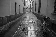 Fiorentino_Giuliana_541#9