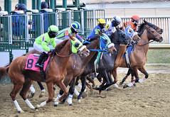 "2018-01-15 (6) r5 at Laurel Park - and they're off (JLeeFleenor) Tags: photos photography md marylandracing maryland marylandhorseracing laurelpark jockey جُوكِي ""赛马骑师"" jinete ""競馬騎手"" dżokej jocheu คนขี่ม้าแข่ง jóquei žokej kilparatsastaja rennreiter fantino ""경마 기수"" жокей jokey người horses thoroughbreds equine equestrian cheval cavalo cavallo cavall caballo pferd paard perd hevonen hest hestur cal kon konj beygir capall ceffyl cuddy yarraman faras alogo soos kuda uma pfeerd koin حصان кон 马 häst άλογο סוס घोड़ा 馬 koń лошадь"