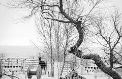 another cold and snowy day (g*s*c) Tags: horse trees rapidcity southdakota snow primrose