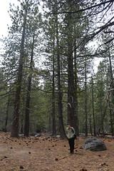 Lassen Volcanic Park (Jess (on a plane)) Tags: day15 california usa holiday 2018 roadtrip camping lassenvolcanicpark lassen