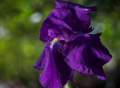 la robe (joboss83) Tags: fujixt1 flower fleur bokeh nature jaunes prairie couleurs
