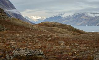 Arctic Autumn Vista