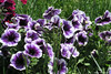 For Spring Mood... (alekathom) Tags: springscenery spring mood april greece hellas garden nature outdoor urbannature