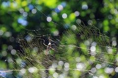Spider web in Argentina. (Jill Rowland) Tags: travel patagonia condorargentina chile southamerica tour tourist tourism outdoors hiking mountain wildlife penguins birds sea lake water reflection glacier scenery landscape nature naturalbeauty natural canon canonphotography canonaddicts canonphoto canonphotos spider web spiderweb abstract abstractart manipulatedphoto