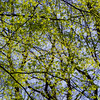 light&shadow abstraction (marinachi) Tags: spring sundaylights green trees twigs olympusem10markii olympus blue leaves