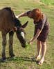 DSC_0949 (dmilokt) Tags: лошадь конь horse деревня village dmilokt