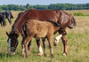 DSC_0931 (dmilokt) Tags: лошадь конь horse деревня village природа nature dmilokt