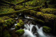 IMG_0754.jpg (Eric DeBord) Tags: 6d creek oregon nw forest water nature northwest willamettenationalforest canon canontse24mmf35lii wilderness cascademountains