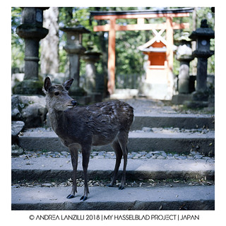 Hasselblad Project | JAPAN
