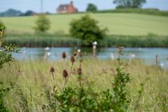 Upton Warren summer 4442 (Ruth Flickr) Tags: europe flashes midlands uptonwarren wwt worcestershirewildlifetrust worcestershireengland birds gulls reserve summer